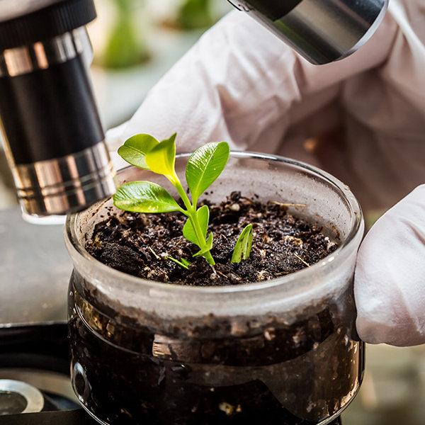 biostymulatory biolchim oferta